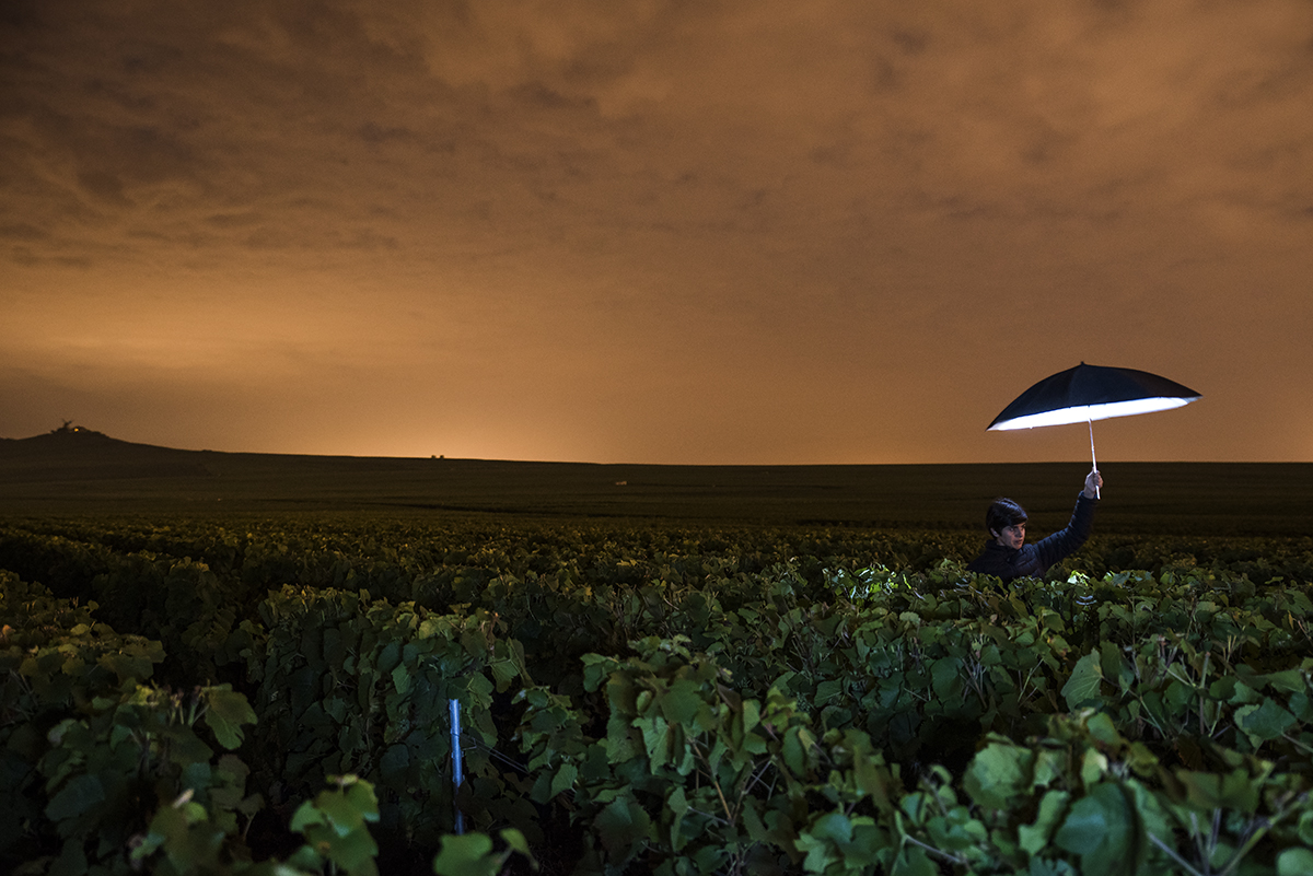 Vineyards pictured at night with orange sky